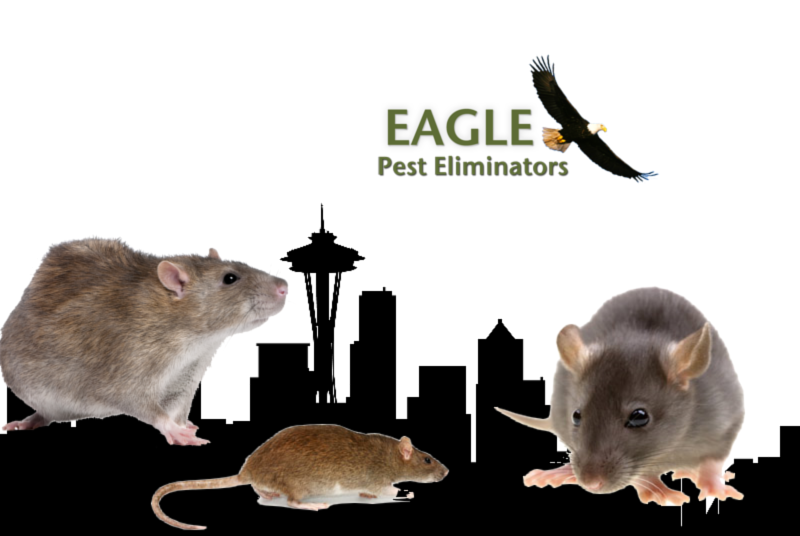 Seattle Rodent Problem