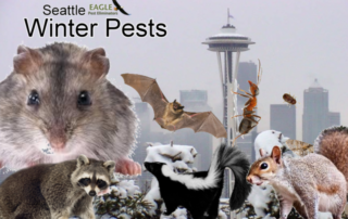 seattle-pest-control-winter-2017
