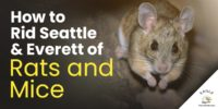 Rats, Mice, Seattle Rodent Control