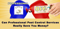 DIY pest control vs professional pest control company Eagle Pest Eliminators